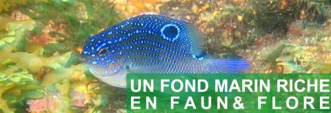 UN FOND MARIN RICHE EN FAUNE & FLORE